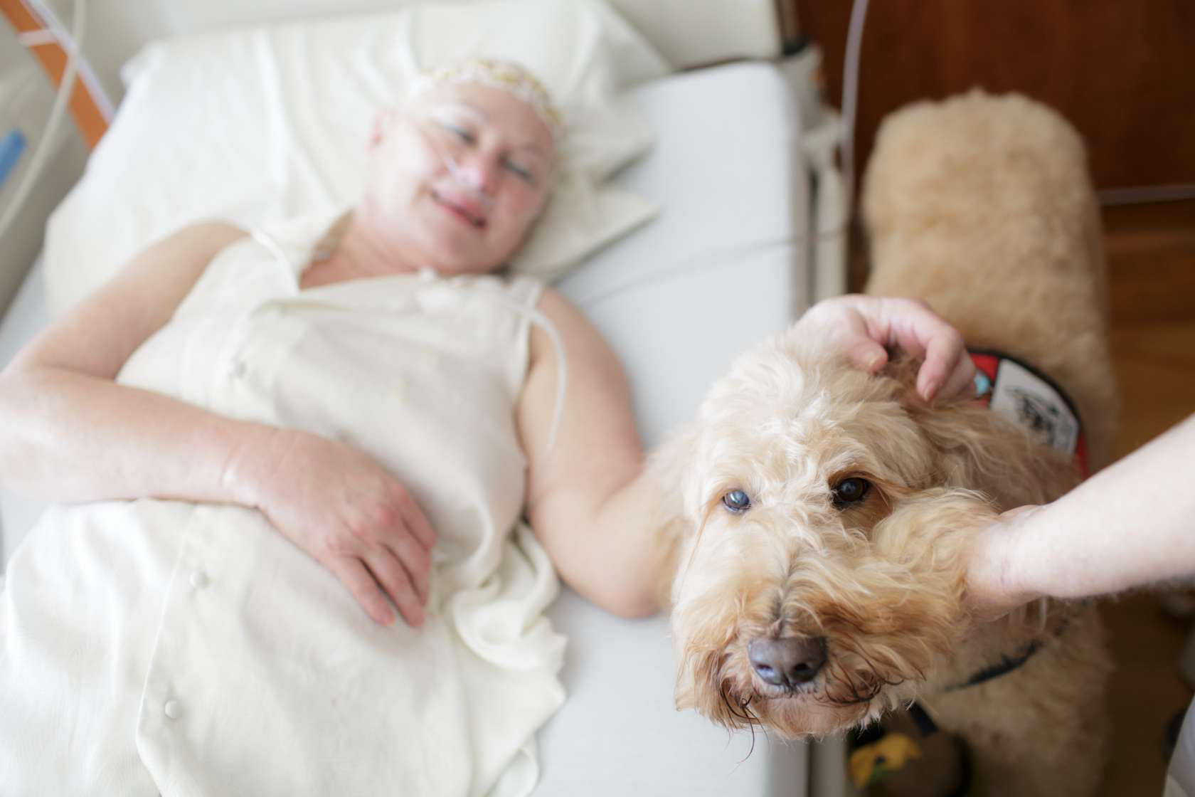 A therapy dog visits a cancer patient in the hospital